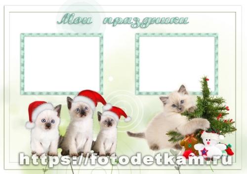 портфолио кошки портфолио общие скачать